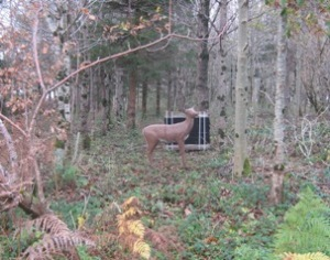 Toad Hollow Archers deer target