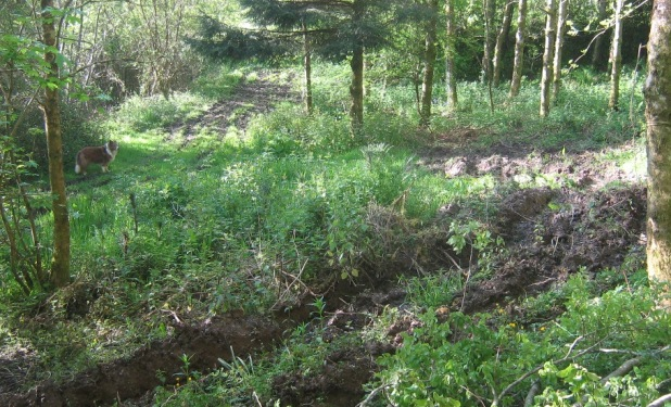 Getting boggy; perhaps a pond would be better?
