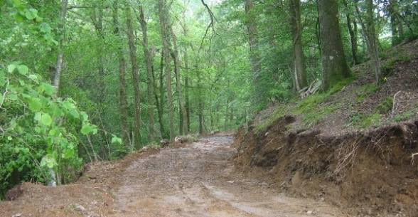 Track in Hakeford Wood