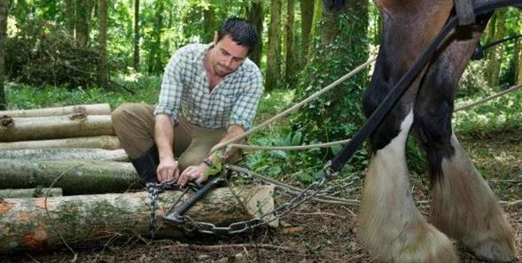 Horse logging 2