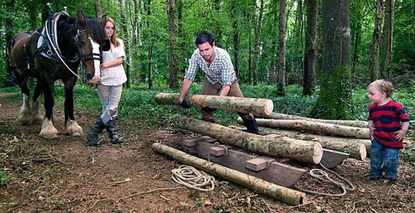 Horse logging 3