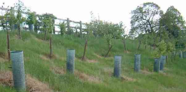 Tree planting (Monsanto)