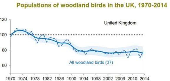 woodland birds graph2