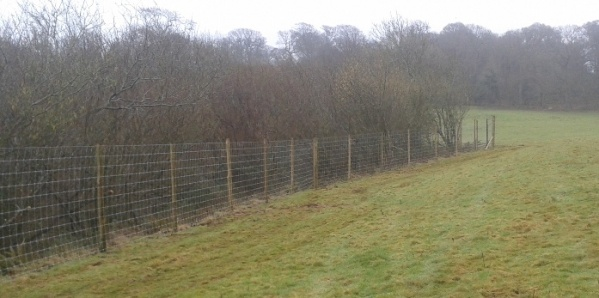 The deer fence